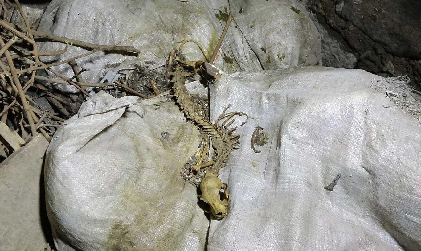 Diyarbakır'da esrarengiz bir hayvanın iskeleti bulundu