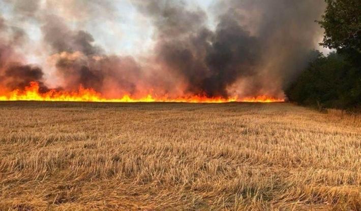 Kürdistani | Kerkük'te Kürt çiftçilerin ekinleri ateşe verildi